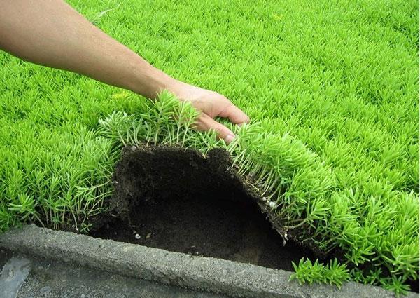 屋顶绿化的植物类型有哪些?