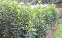 湖南最大的苗木市场